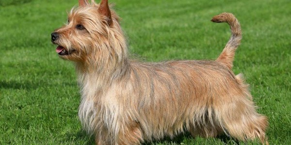 Dogs That Jumped the Most in Popularity