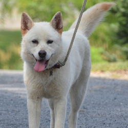 Kulture/Husky Mix/Female/Adult