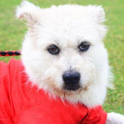 Adopt a dog:Lucia/Terrier Mix /Female/Young ,