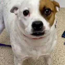 Adopt a dog:me/Hound/Male/Adult,