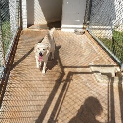 Adopt a dog:Fluffy/Affenpinscher/Male/Adult,
