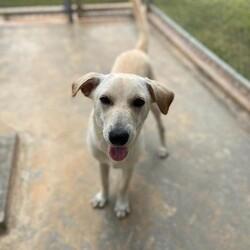 Adopt a dog:Crusty/Affenpinscher/Male/Adult,